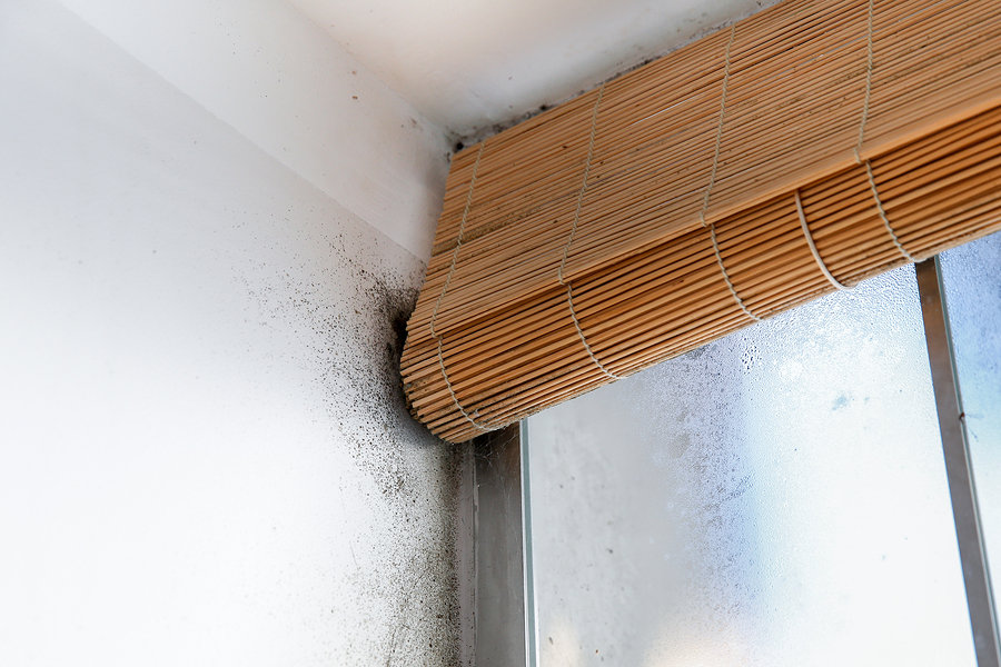 high humidity homes are at risk for dangerous mold